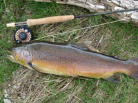 4 lb 7 oz - River Wharfe Near Burnsall
